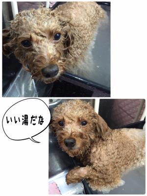 チョコラ風呂_convert_20151109001306