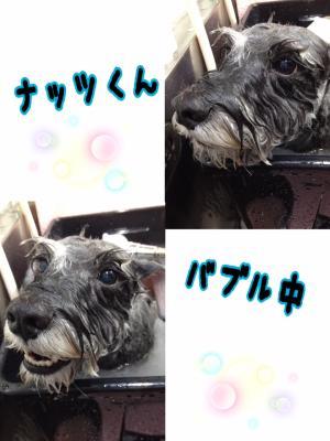 ナッツ風呂_convert_20151109001353