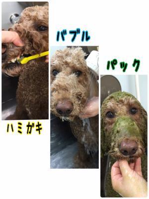 リンジー風呂_convert_20151123234834