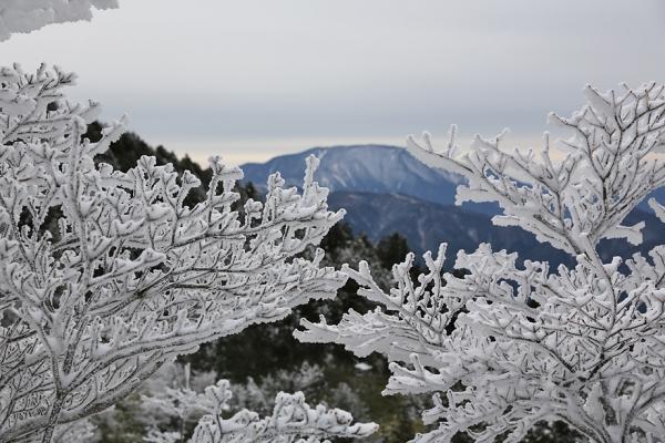 樹氷が美しい