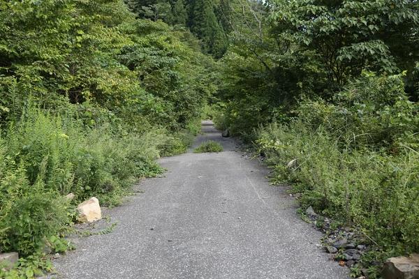 林道は前回よりきれいだった