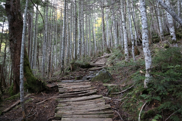 静かな登山道を行く