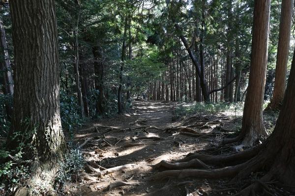 稲荷山コースは特に展望は良くない