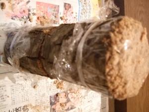 植菌20151205-05