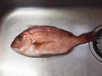 鯛の炙り刺身10