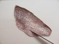 鯛の炙り刺身14