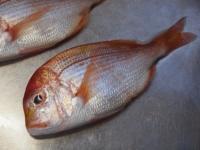 フライパンで連子鯛煮付け19