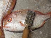 連子鯛のフライパン蒸し33