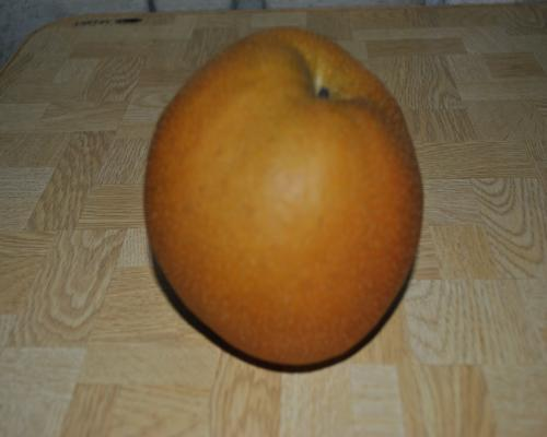 高根沢町の梨