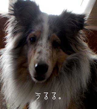 DSC00177_20151031101650a88.jpg