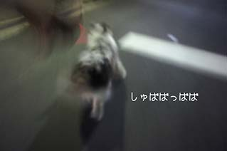 DSC09532.jpg