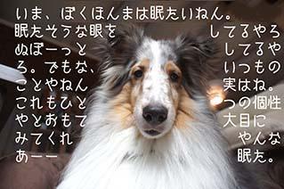DSC0961001.jpg