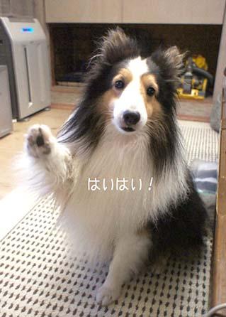 haihai-1_20150918122655dae.jpg