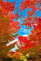 autumn-leaves_00277.jpg