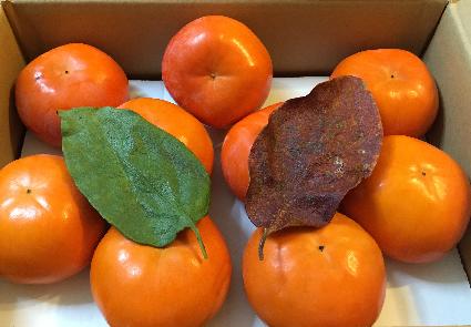 2015 柿