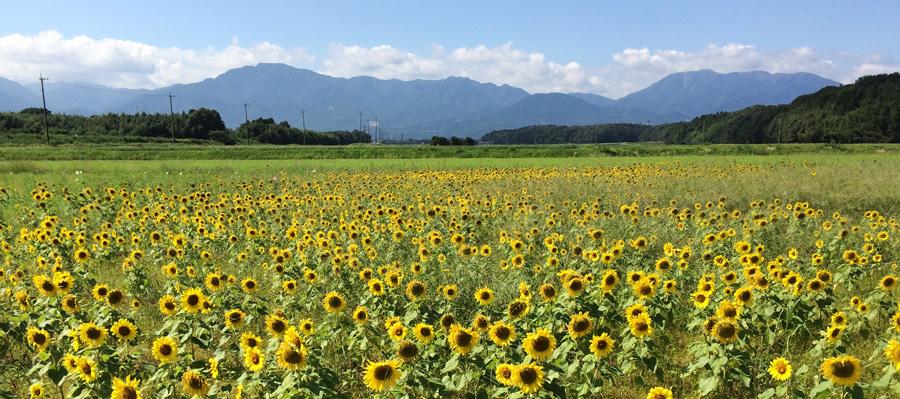 2015-9-菰野町IMG_1456