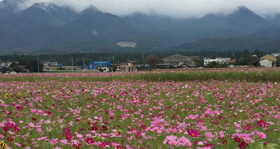 2015-9-菰野町IMG_1442