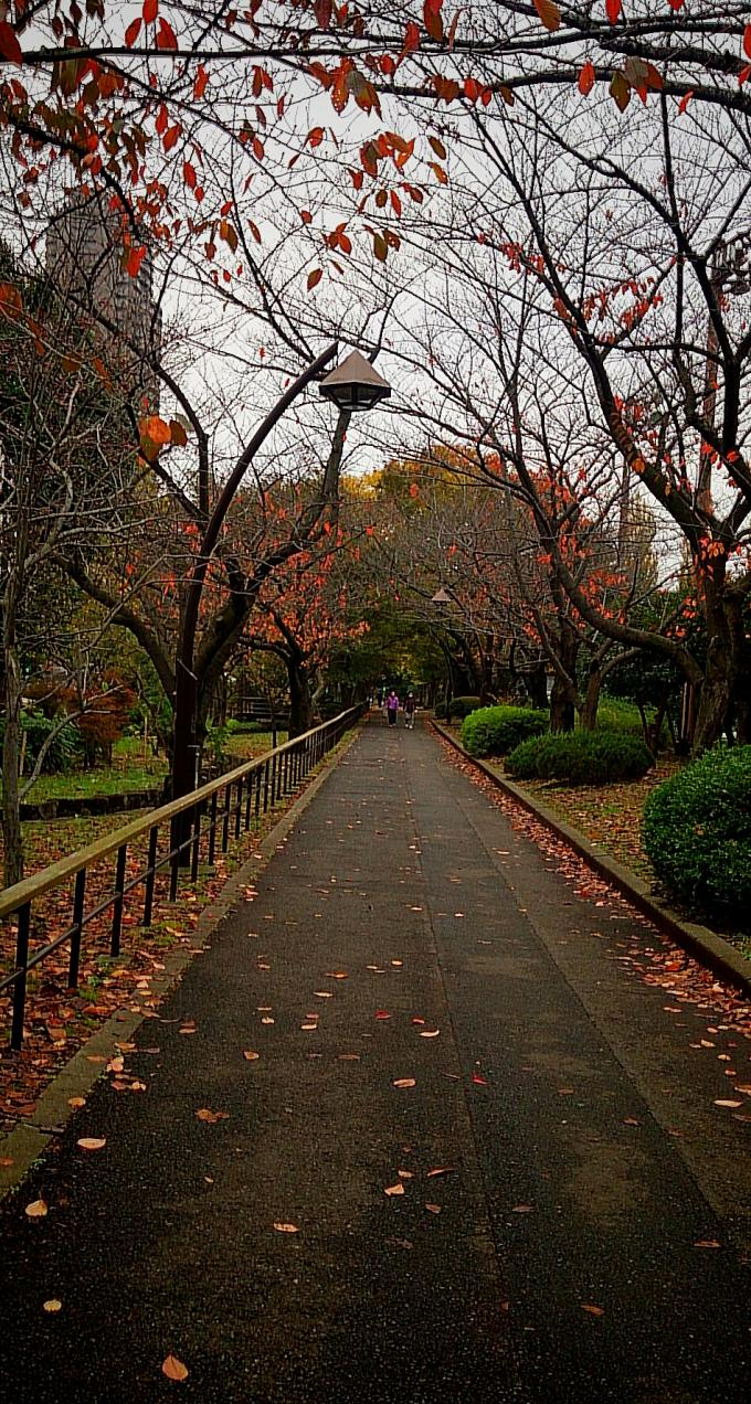 公園_20151126