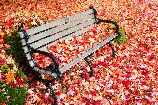 autumn-1037307_640.jpg