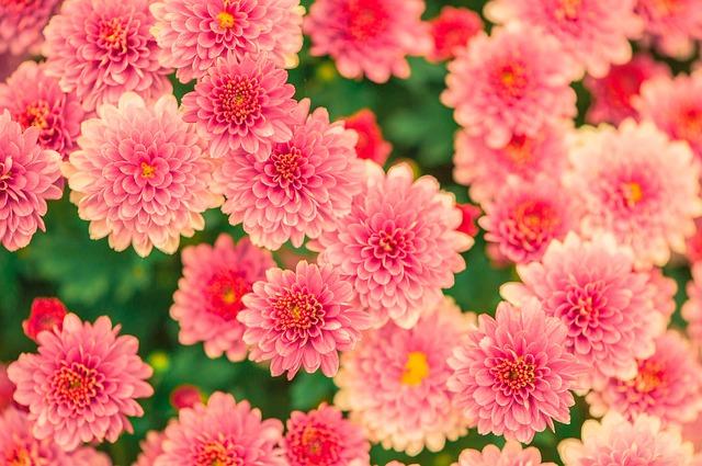 flowers-482575_640.jpg