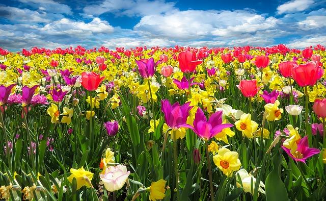 spring-awakening-1197602_640.jpg
