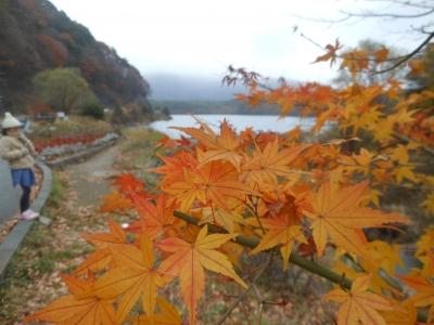 N_studiomimosa西湖