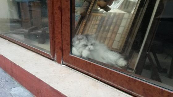 ニースの猫