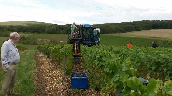 シャンパーニュ・ブドウ収穫