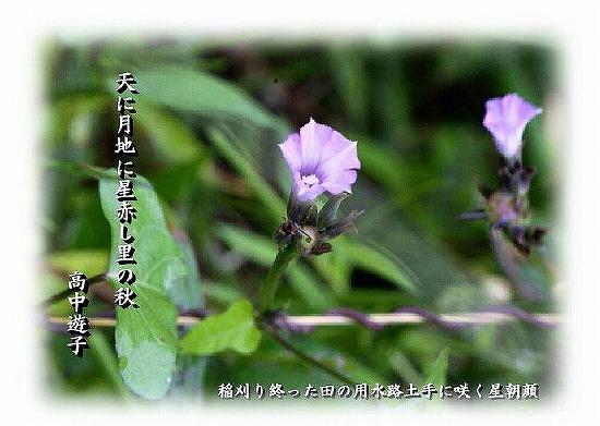 yu388.jpg