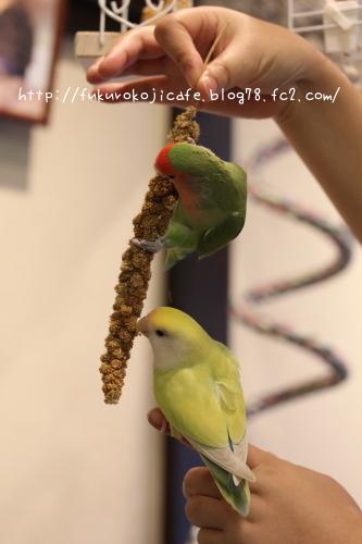 食いしん坊2羽