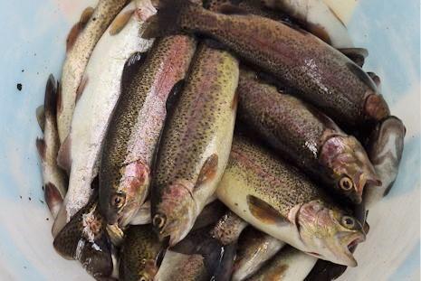 たくさん釣れました。