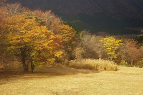 湖尻園地の紅葉