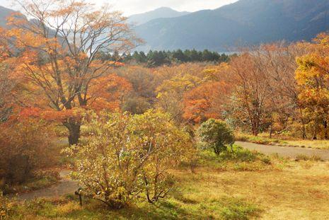芦ノ湖畔の紅葉