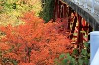 橋の下の紅葉4