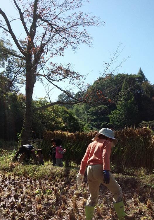 2015.10まめでっぽう稲刈り(はざ掛け)
