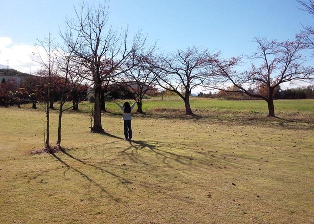 2015.11中農祭 木
