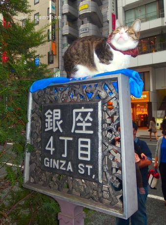 銀座四丁目の猫