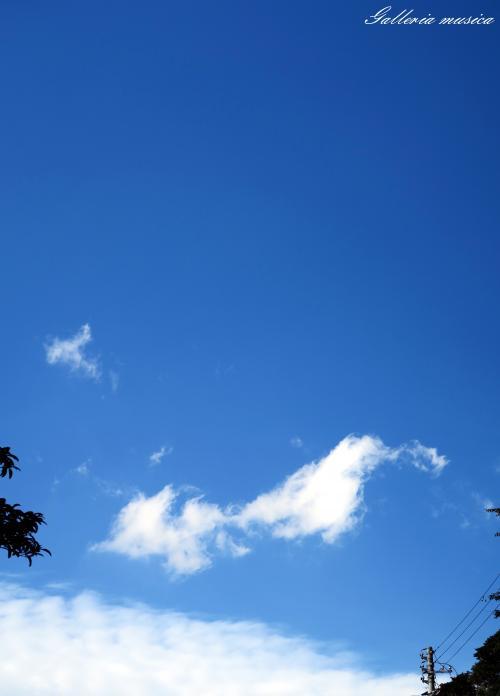雲のかたち。1
