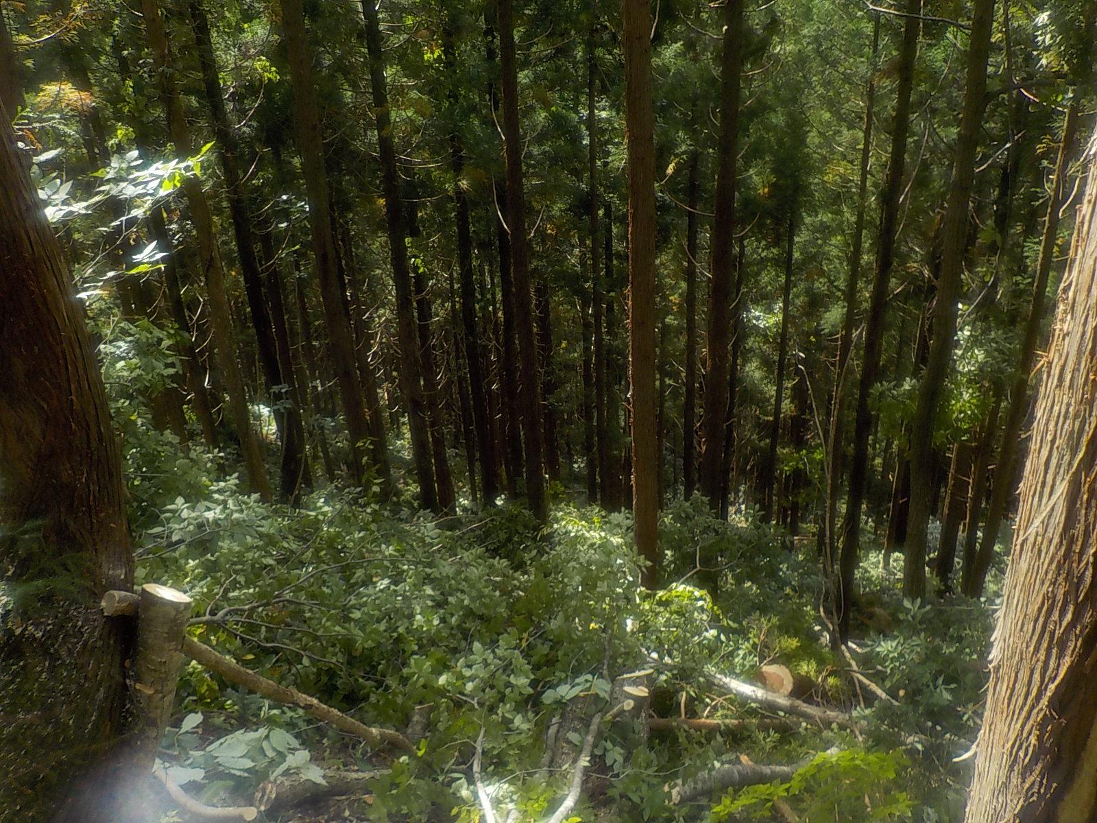 林内の雑木