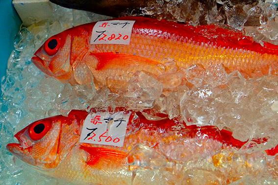 沖縄の赤い魚