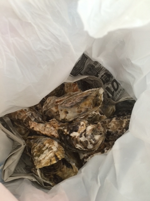 お土産牡蠣