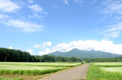 蕎麦畑全景2