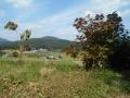 八郷の丘 (2)