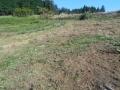 草刈り後 (3)