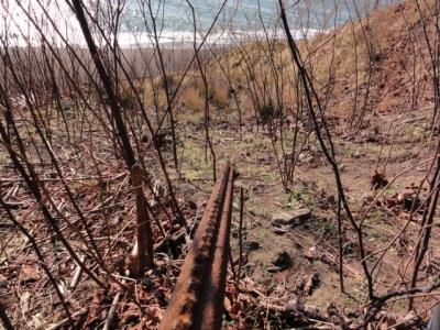 春採湖 124