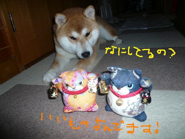 2_20151102184946ac6.jpg