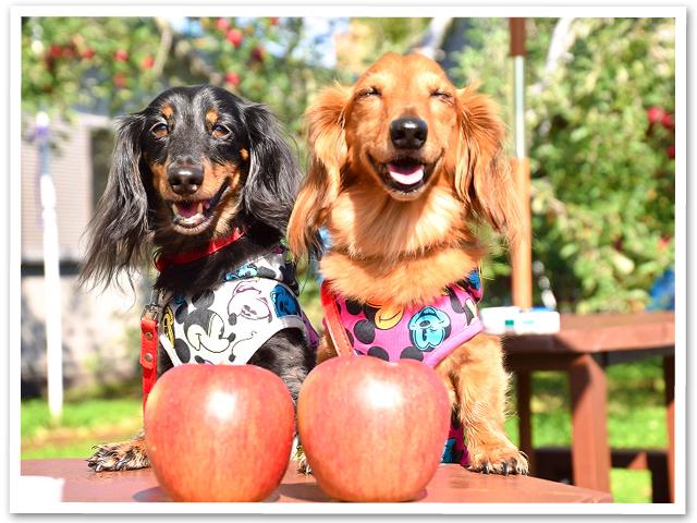 リンゴ狩り