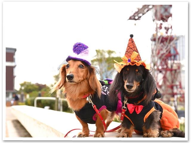 Halloween☆豊洲