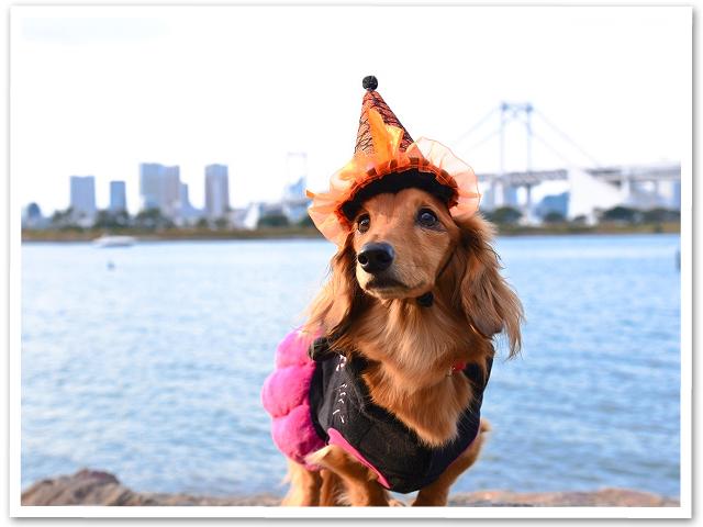 Halloween☆お台場