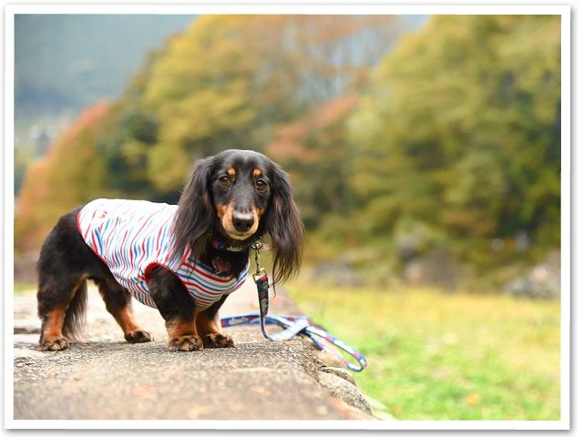 散歩☆御岳渓谷